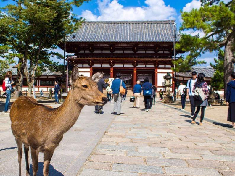 10 amazing cities to visit in japan 8