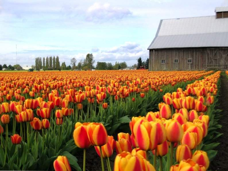 10 best cheap spring vacations in north america 8