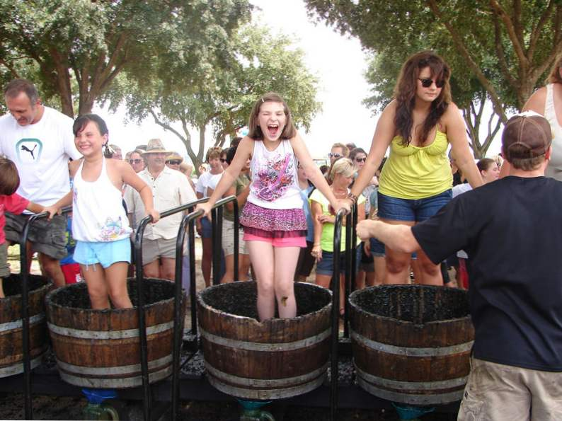 10 best wineries in florida to visit
