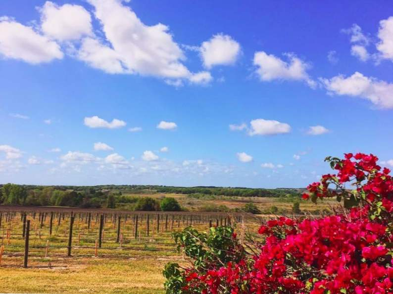 10 best wineries in florida to visit 4