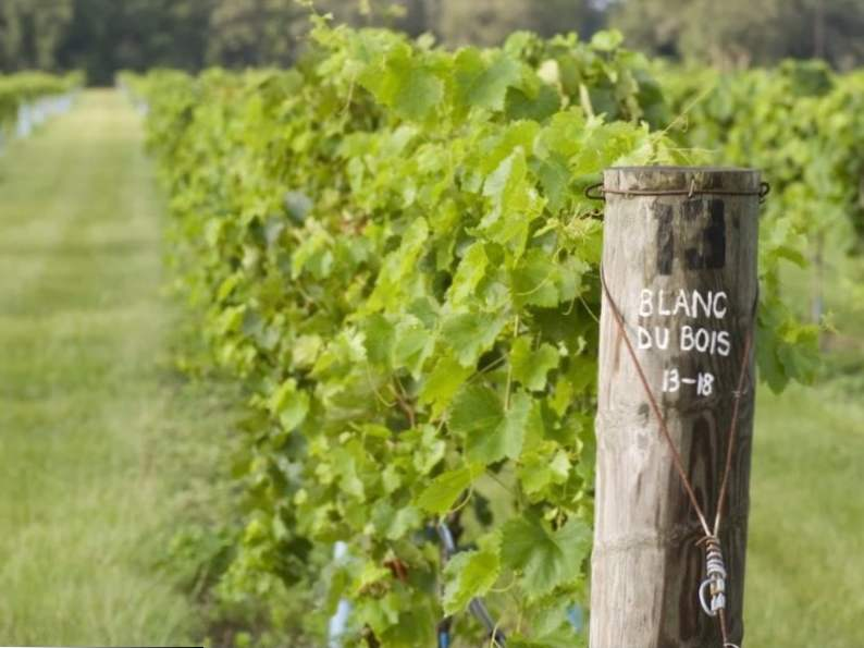 10 best wineries in florida to visit 7