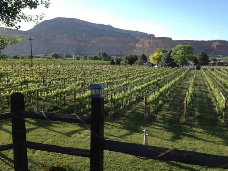 10 best wineries to visit in colorado 3
