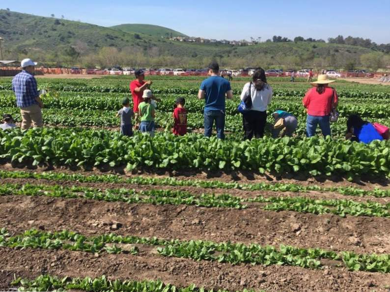 10 must see farms in california you need to tour 2