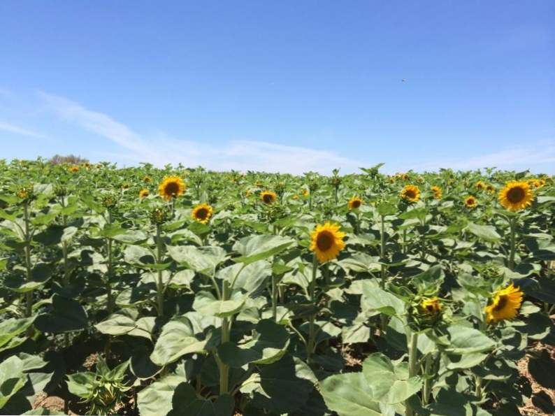 10 must see farms in california you need to tour 4