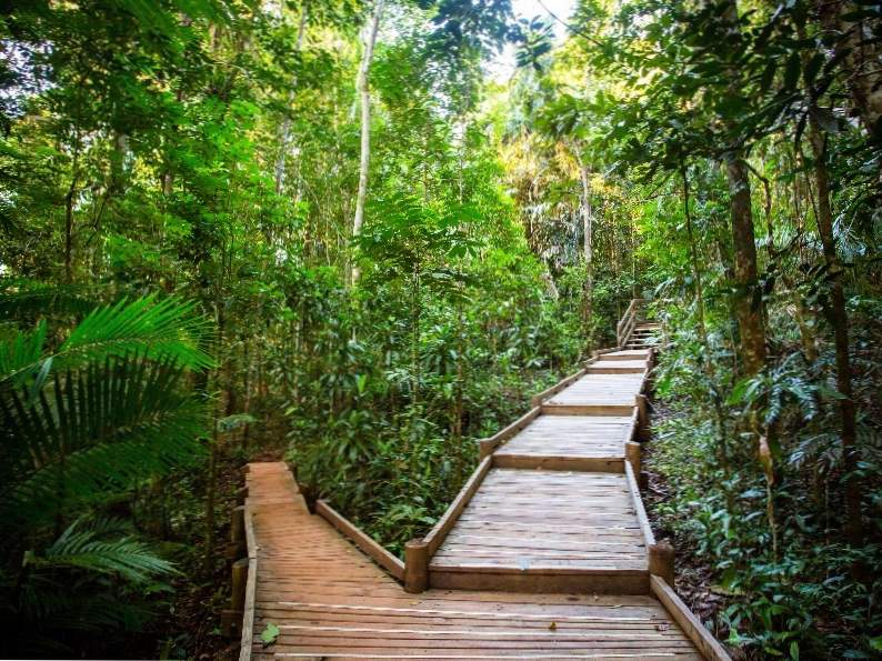 10 of the worlds most beautiful rainforests 5