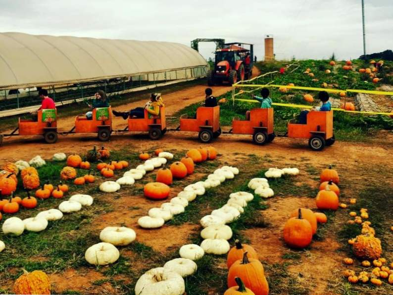 10 pumpkin patches to visit in georgia this fall 2