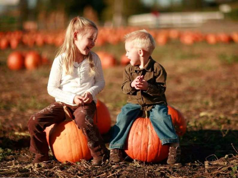 10 pumpkin patches to visit in georgia this fall 5