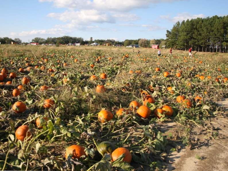 10 pumpkin patches to visit in georgia this fall 6