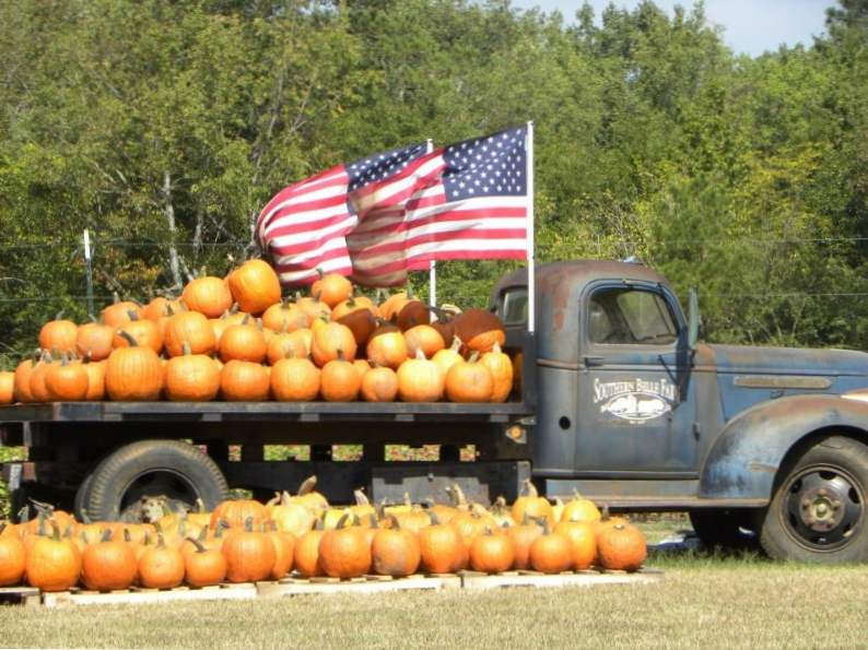 10 pumpkin patches to visit in georgia this fall 8