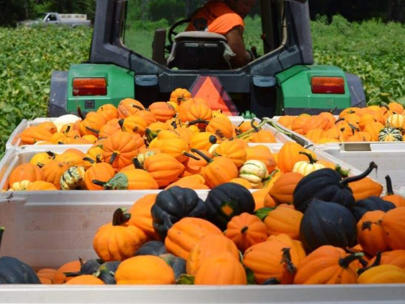 10 pumpkin patches to visit in georgia this fall 9