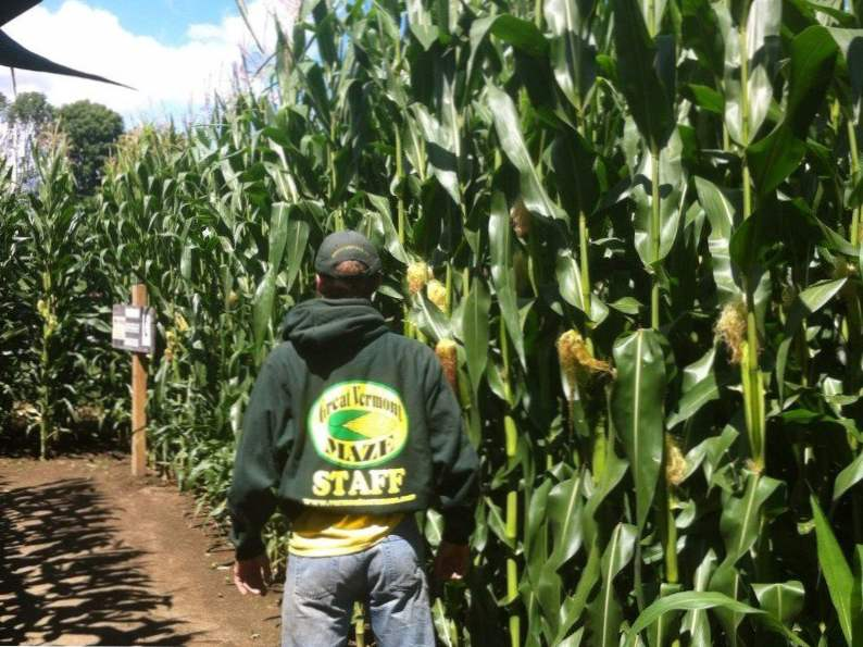 12 amazing corn mazes to visit in the us 3