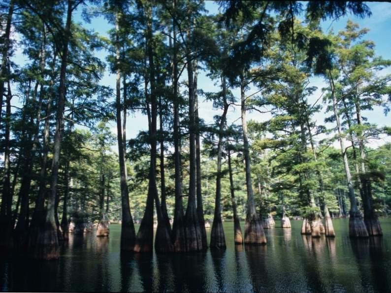 12 best natural wonders in texas to visit 11
