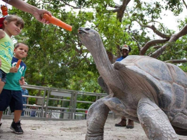 13 best things to do with kids in miami florida 2