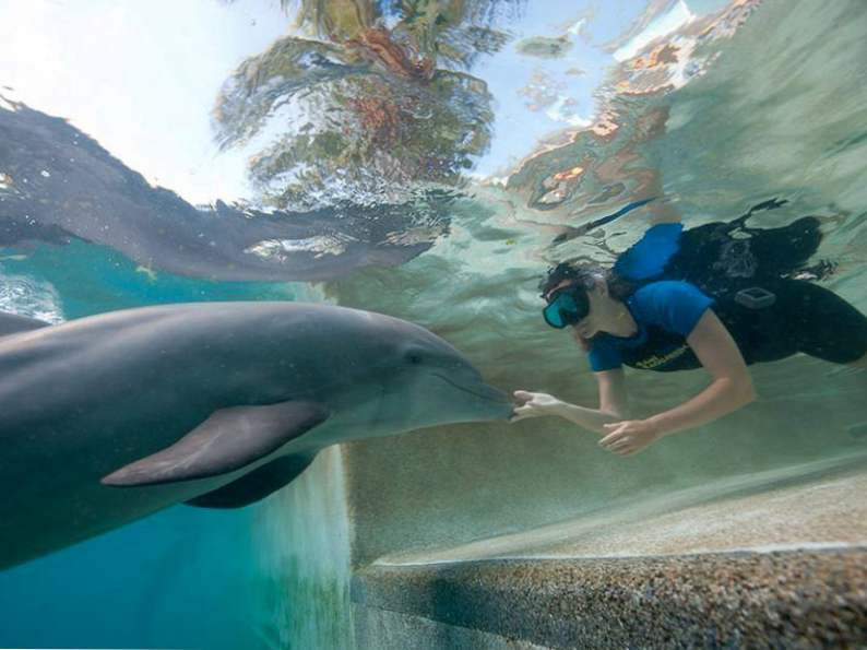 13 best things to do with kids in miami florida 4