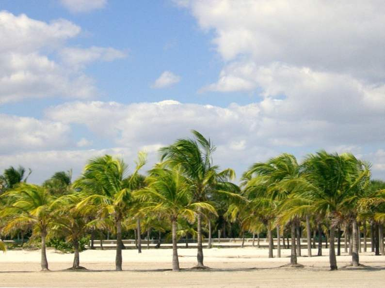 13 best things to do with kids in miami florida 7