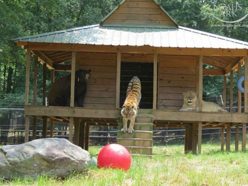 5 animals to meet at noahs ark sanctuary in locust grove georgia 2