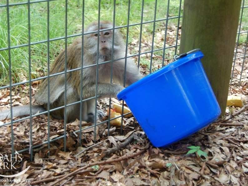 5 animals to meet at noahs ark sanctuary in locust grove georgia 3