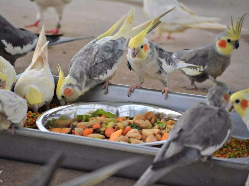 5 animals to meet at noahs ark sanctuary in locust grove georgia 5