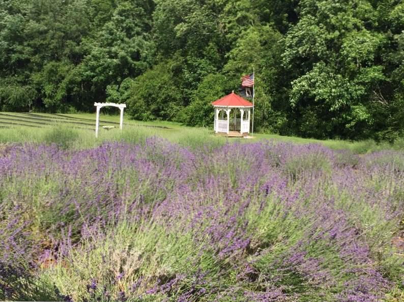 5 reasons to visit the red oak lavender farm in dahlonega georgia 2