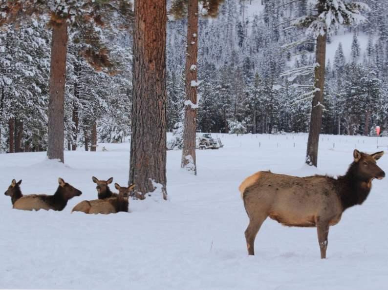 8 gorgeous winter destinations in montana