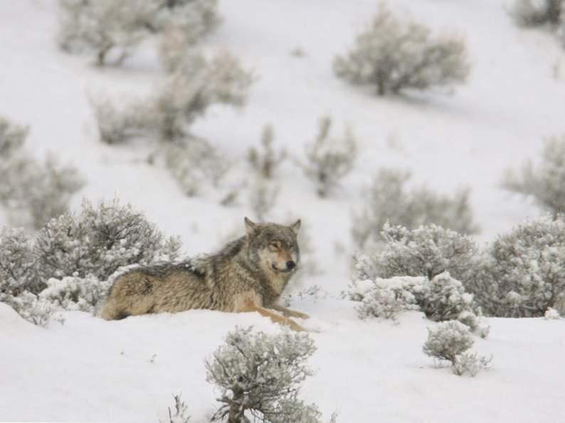 8 gorgeous winter destinations in montana 2