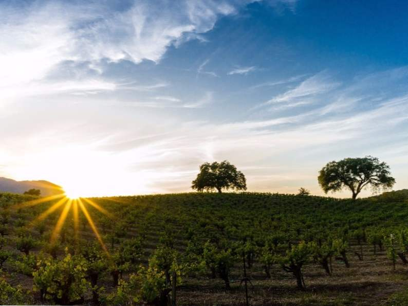 8 of the most spectacular california wine regions to visit