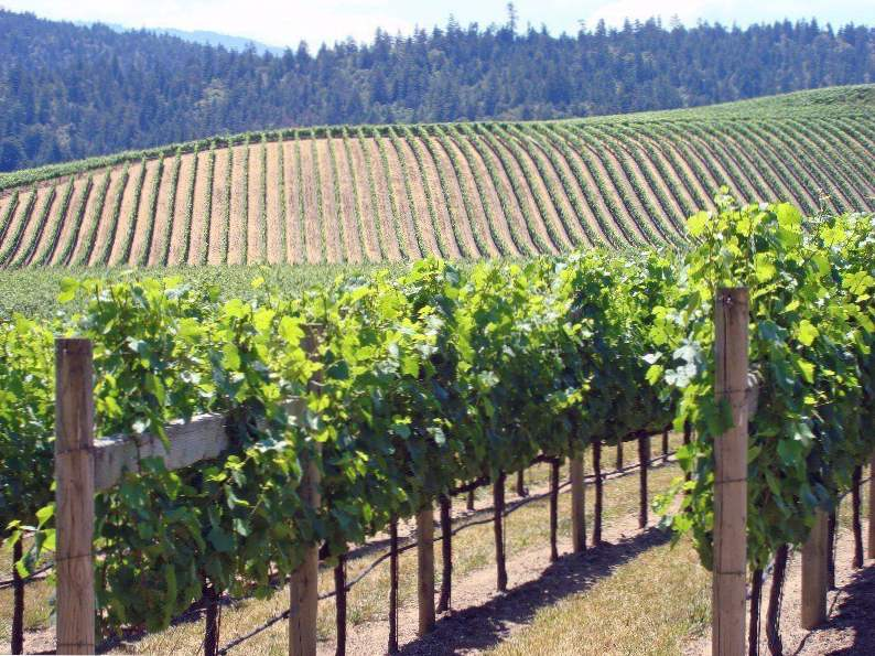 8 of the most spectacular california wine regions to visit 2