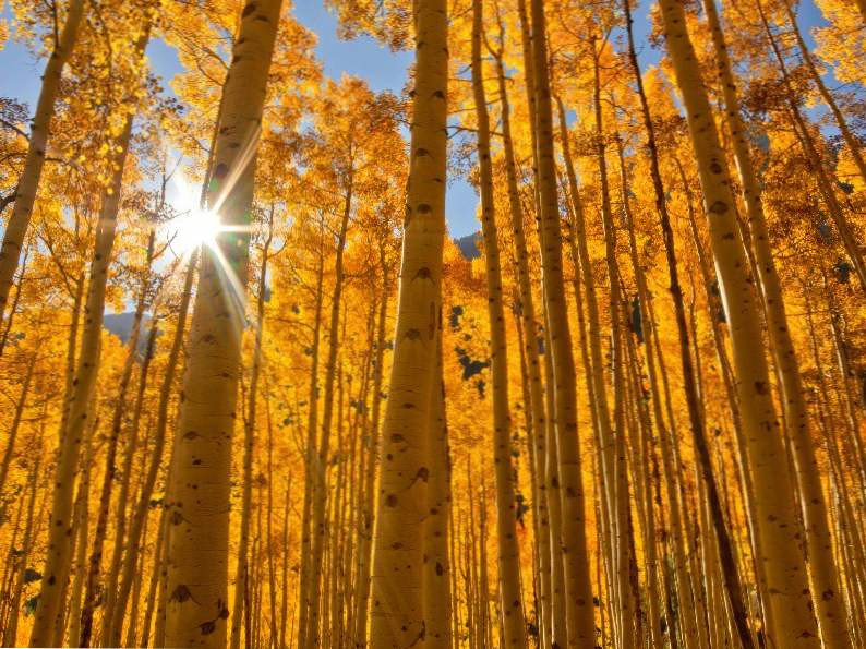 9 most gorgeous places in colorado for fall color 4
