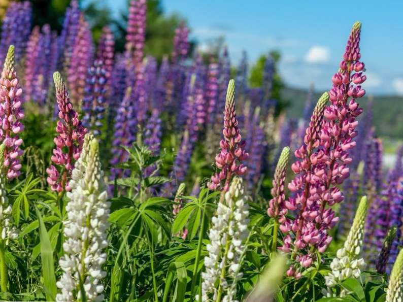 crested butte is the wildflower capital of colorado 2