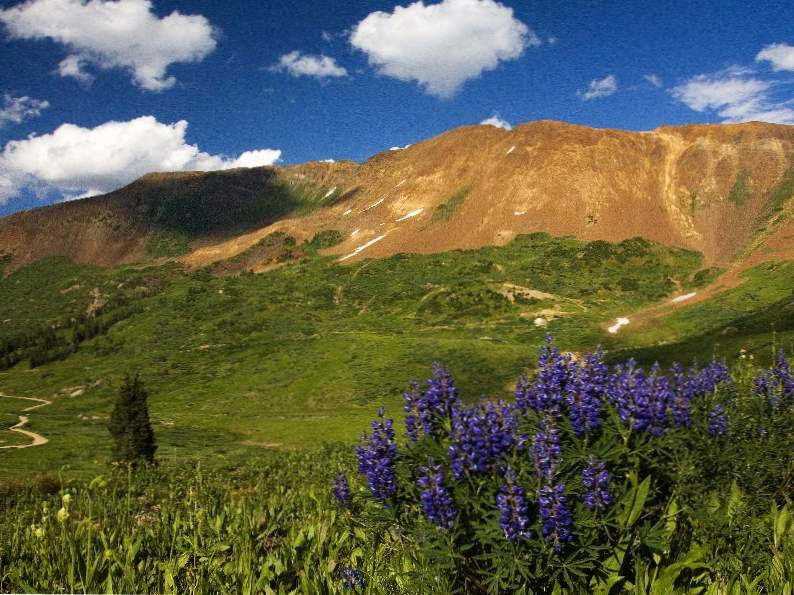 crested butte is the wildflower capital of colorado 4