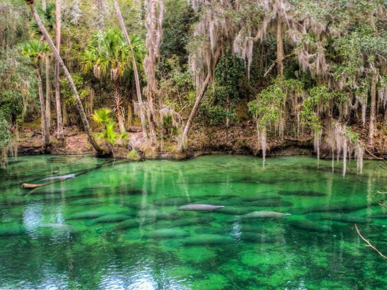see manatees and more in blue springs state park florida 2