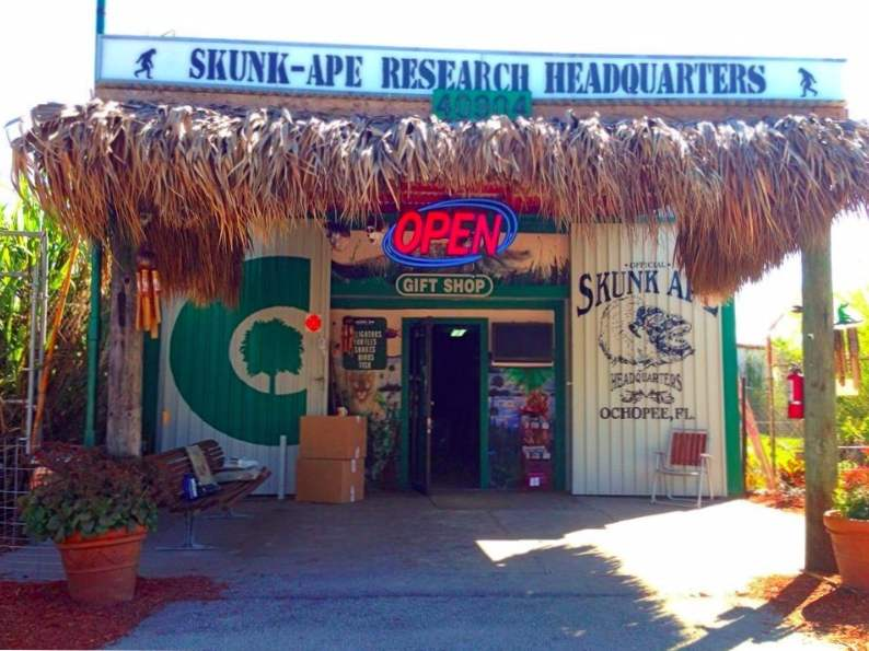 the skunk ape research center in the everglades is a unique florida gem