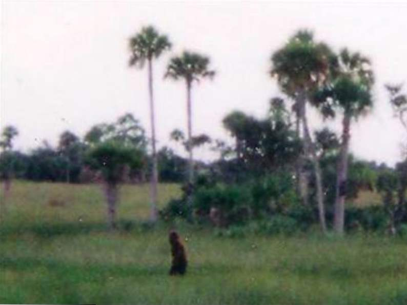 the skunk ape research center in the everglades is a unique florida gem 4
