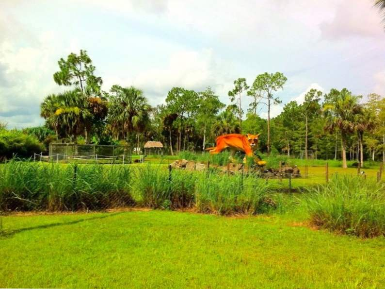 the skunk ape research center in the everglades is a unique florida gem 6