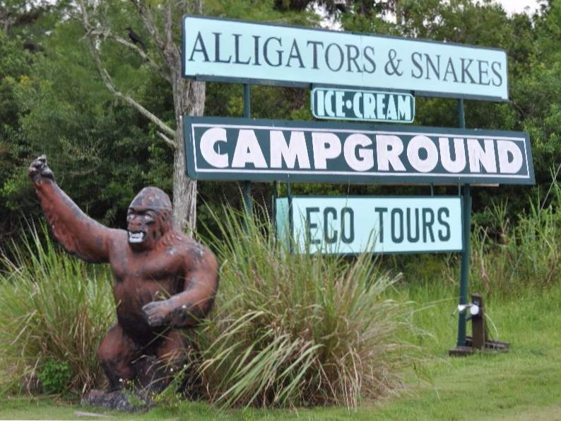 the skunk ape research center in the everglades is a unique florida gem 7