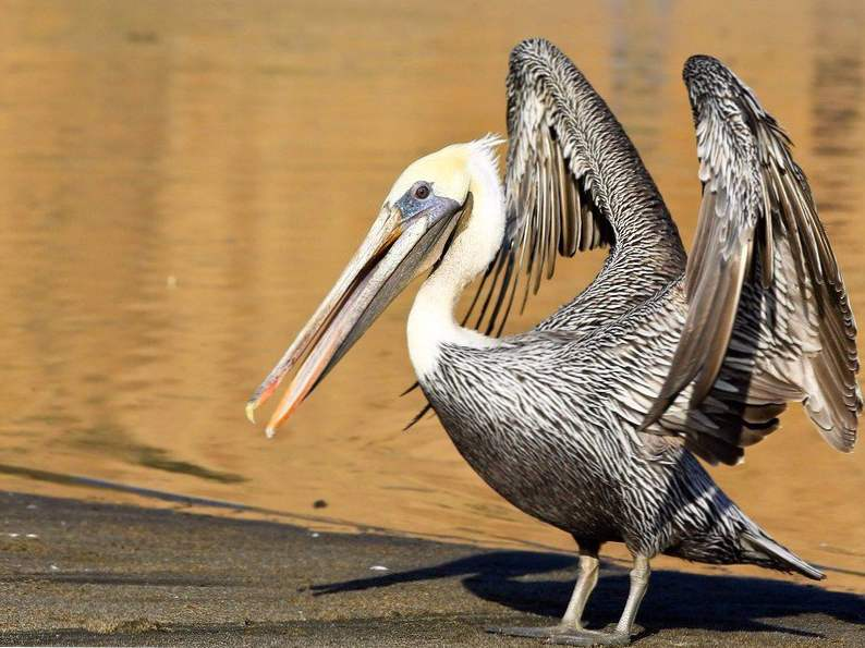 top 12 spots in the world for birdwatching 10