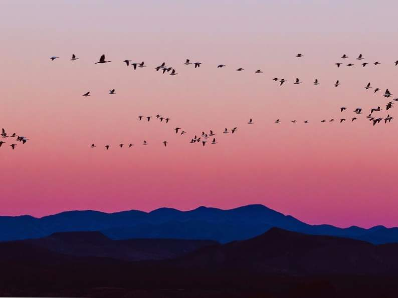 top 12 spots in the world for birdwatching 11