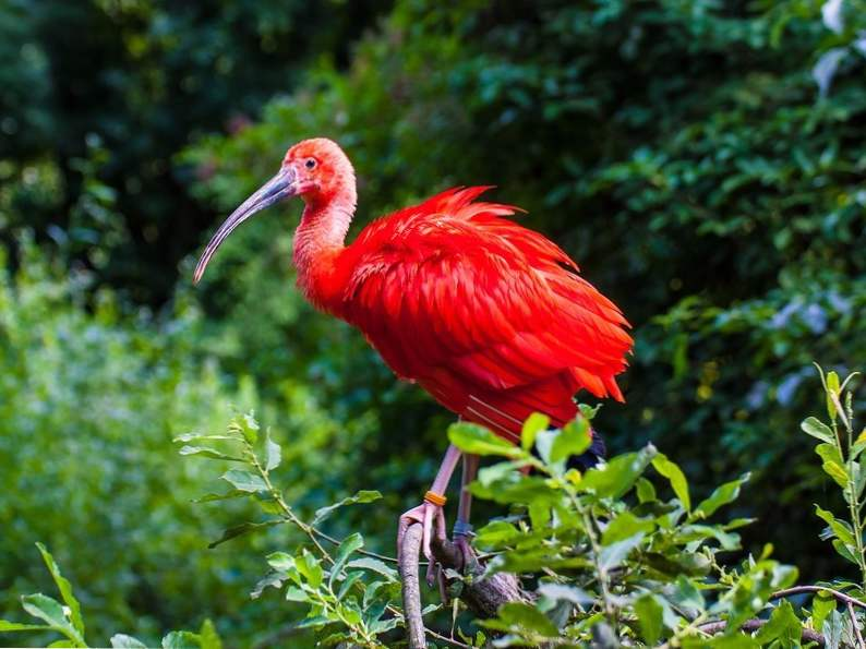 top 12 spots in the world for birdwatching 2