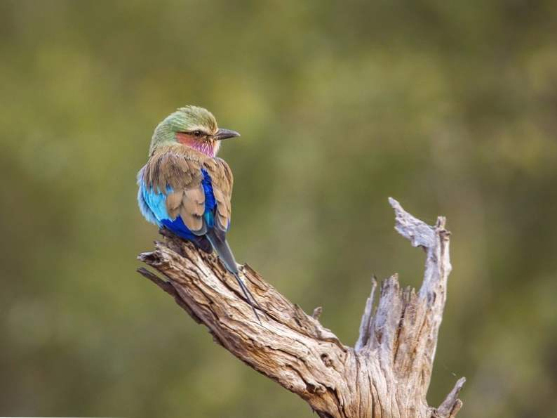 top 12 spots in the world for birdwatching 3