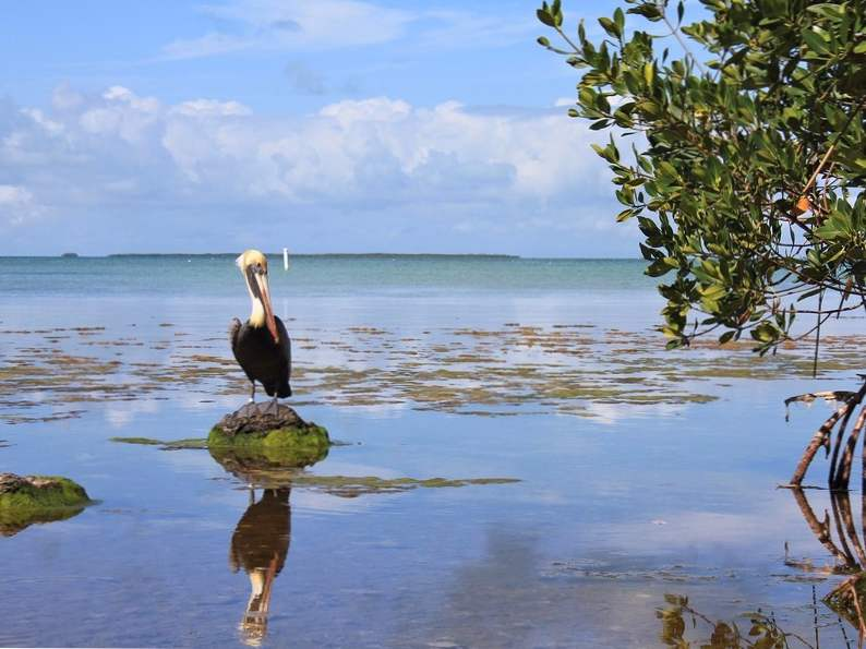 top 12 spots in the world for birdwatching 5