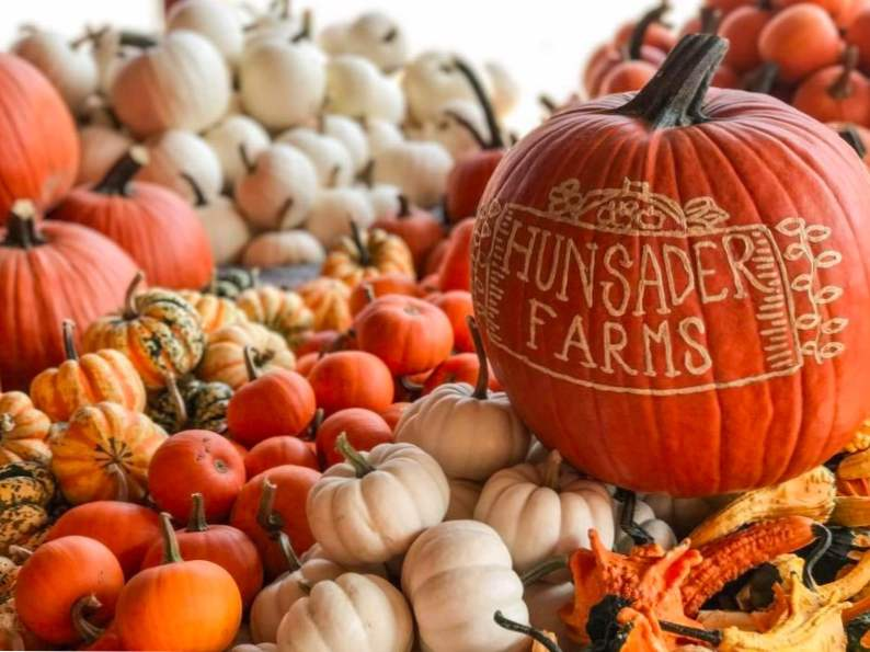 top 9 pumpkin patches to visit this fall in florida 3