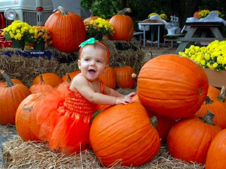 top 9 pumpkin patches to visit this fall in florida 5