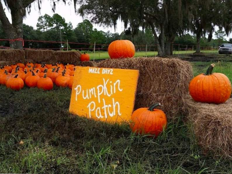 top 9 pumpkin patches to visit this fall in florida 6