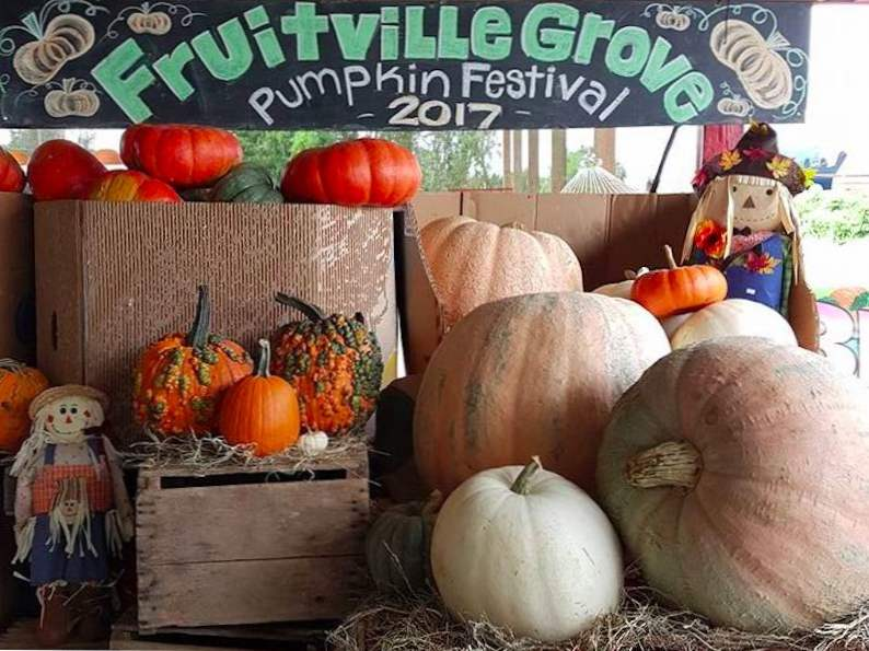 top 9 pumpkin patches to visit this fall in florida 7