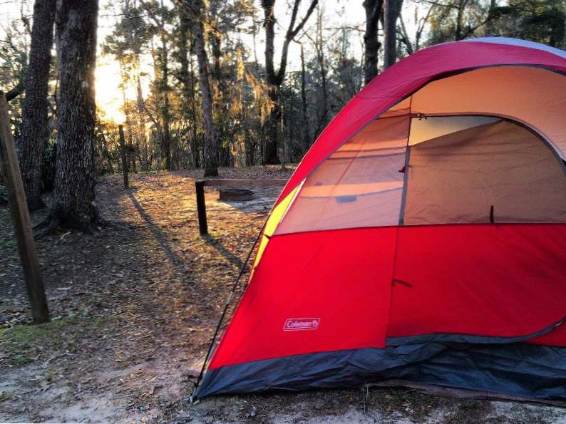 torreya state park might be floridas best place for fall foliage