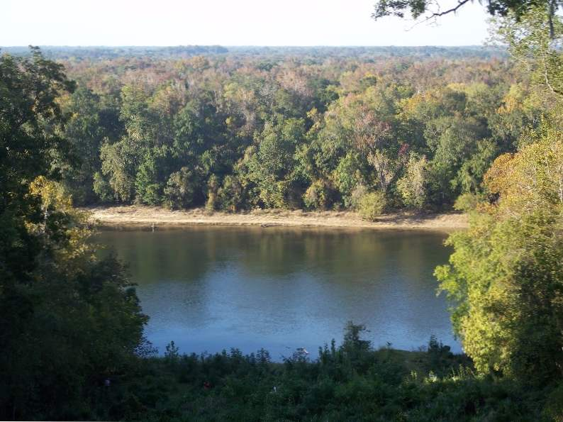torreya state park might be floridas best place for fall foliage 4