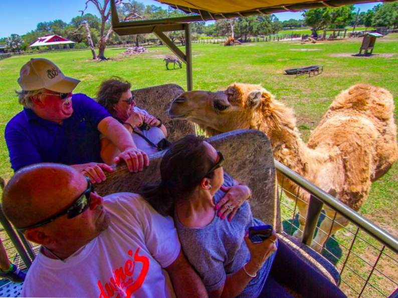 you can feed giraffes at this wildlife preserve in florida 2