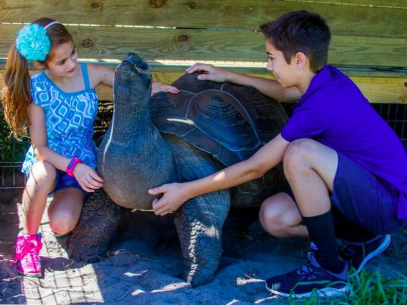 you can feed giraffes at this wildlife preserve in florida 4
