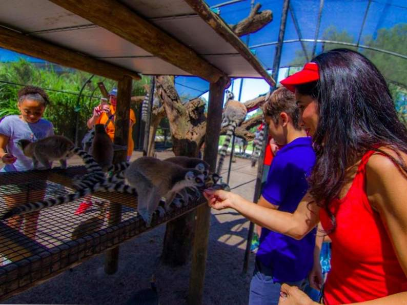 you can feed giraffes at this wildlife preserve in florida 5