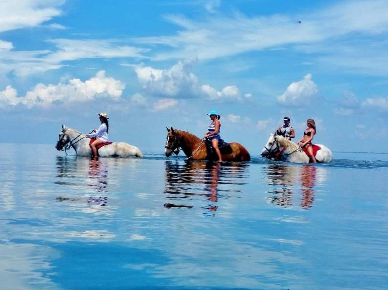 you can go swimming with horses in pinellas park fl